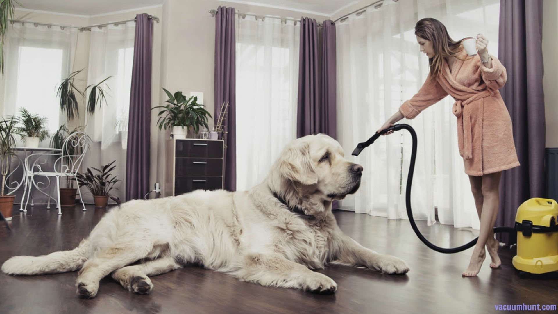 Best-Pet-Hair-Vacuum