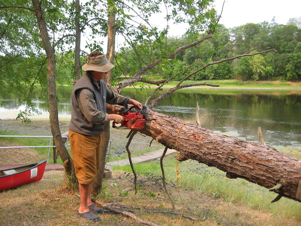 Hire-Professionals-To-Tree-Removal-Company
